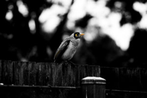Foto: VinbaiManyau/Flickr
